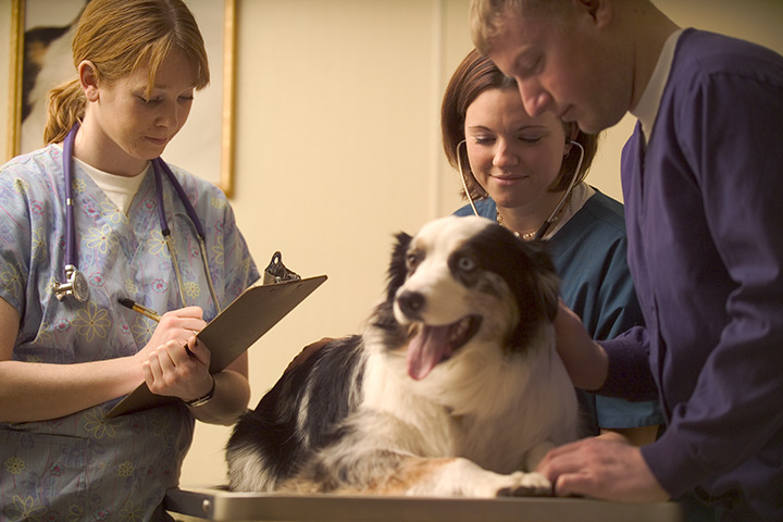 Pet Clinics and Veterinarian Review Monitoring Service
